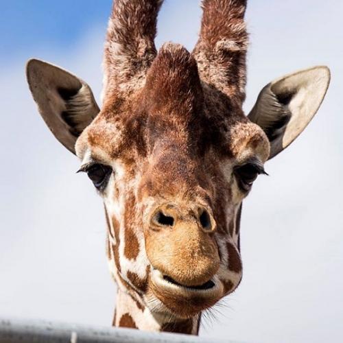 Jyllands Park Zoo 2020 - Spar op til 21% (Åbner den 22. maj)