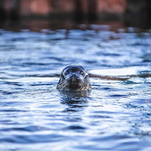 Nordsøen Oceanarium - Spar 15%